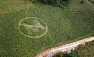 no-monsanto-crops