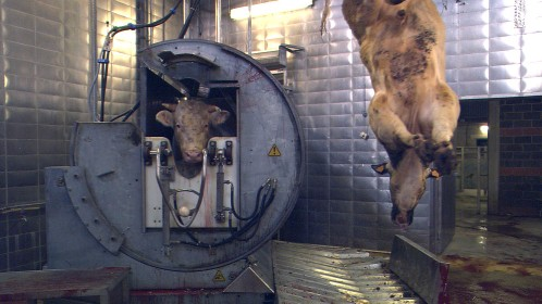 Our Daily Bread A Radically Silent View Of Factory Farming